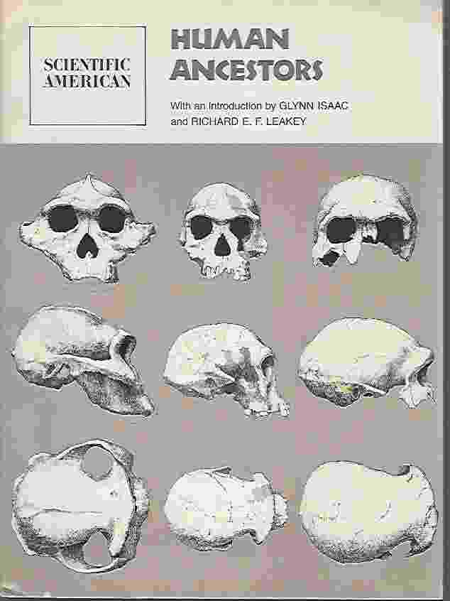 Image for HUMAN ANCESTORS  Readings from Scientific American