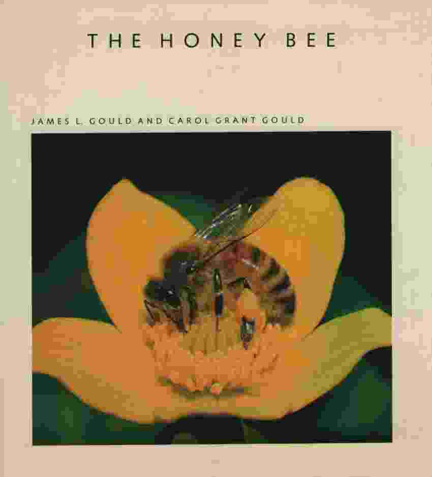 Image for THE HONEY BEE