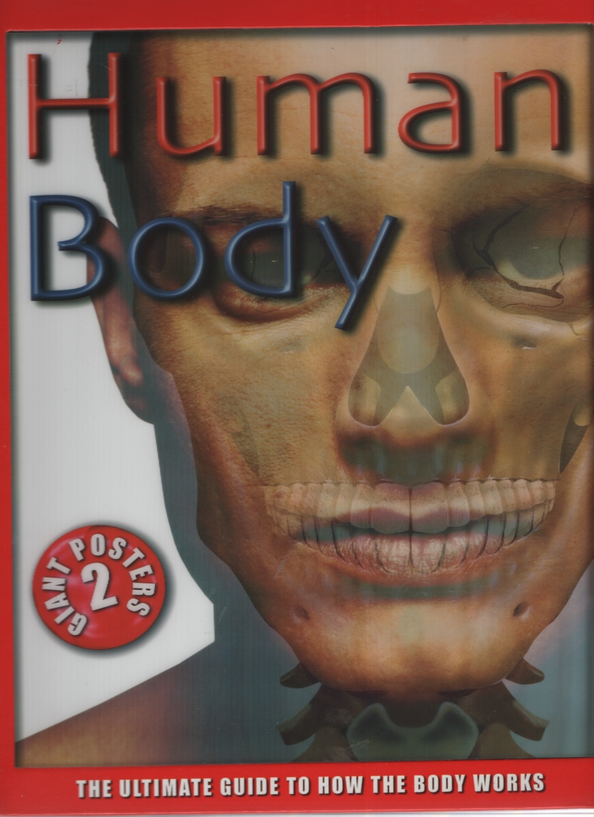 Image for HUMAN BODY The Ultimate Guide to How the Body Works